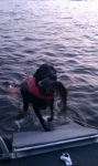 Even dogs can catch fish on Gardners Lake.