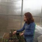 Here's Jen planting in the greenhouse. Lots of hours handling teeny little seedlings. It's a very calm and quiet way to spend the day.