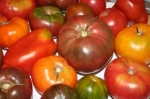 Here's a sampling of Joe's tomatoes.